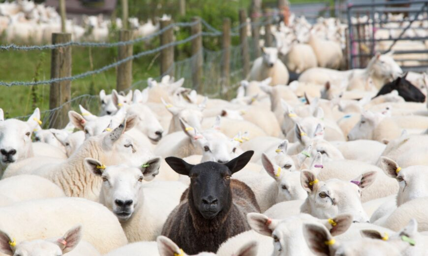 se existing data to drive flock performance, urges RH&W