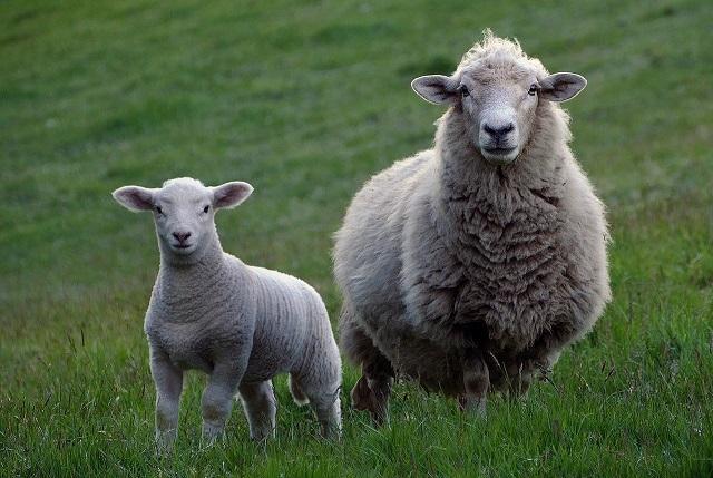 uminant Health & Welfare responds to Defra consultation on animal transport